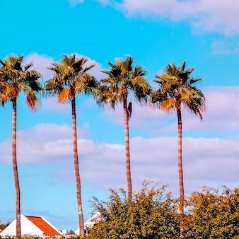 Palm. reisconcept. canarisch eiland