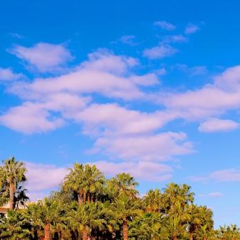 Palm. reizen concept art. canarisch eiland
