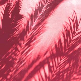 Palm schaduw. minimale modekunst
