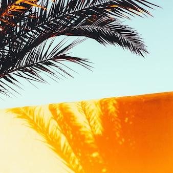 Palm. schaduw op de muur. minimale kunst. tropische sfeer