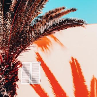 Palm schaduw. tropisch vakantieontwerp. canarisch eiland