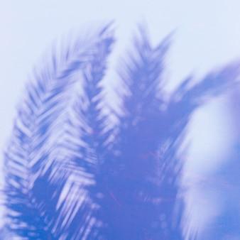 Palm. tropen. schaduw op de muur. minimale kunst