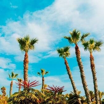Palm tropisch uitzicht. canarisch eiland. reisconcept
