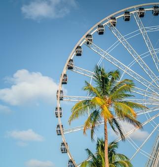 Palm tropisch uitzicht hemel miami florida
