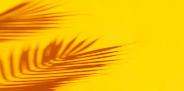 Palm tropische bladeren schaduwen