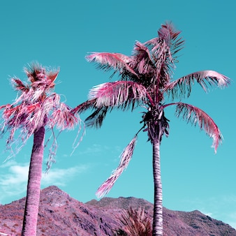 Palm. tropische sferen. canarisch eiland