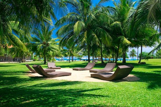 Palm tuin