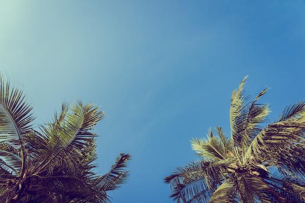 Palm van de lage hoek de mooie kokosnoot met blauwe hemelachtergrond