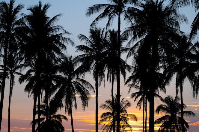 Palm zonsondergang
