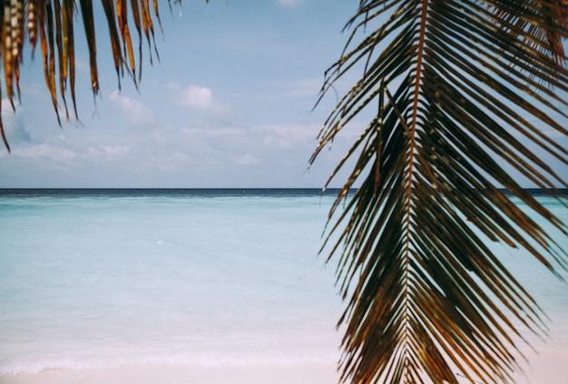 Palmblad, blauwe zee en tropisch wit zandstrand.