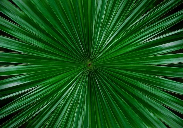 Palmblad met onscherpe achtergrond