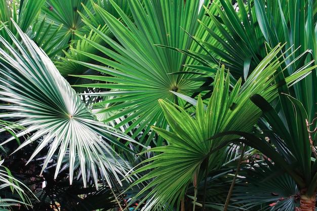 Palmblad op aardachtergrond