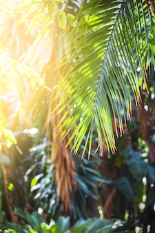 Palmblad op zonnige dag
