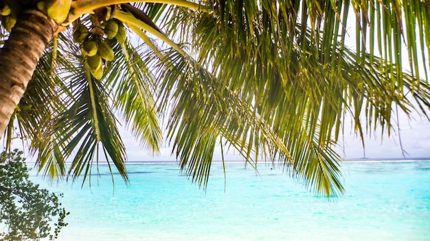 Palmblad over wit zandstrand en turquoise zee, malediven.