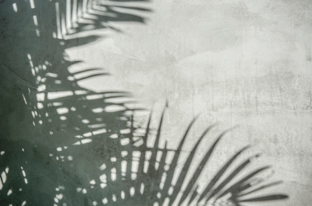 Palmblad schaduw op de muur