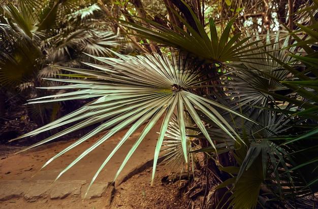 Palmblad verlicht door een zonnestraal in het hart van het bos in het hart van het bos