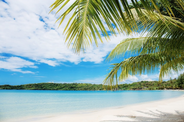 Palmbladen op strand op zee.