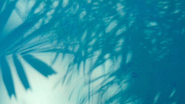 Palmbladenschaduw op blauwe cementmuur
