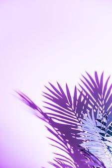 Palmbladenschaduw op purpere achtergrond wordt geïsoleerd die