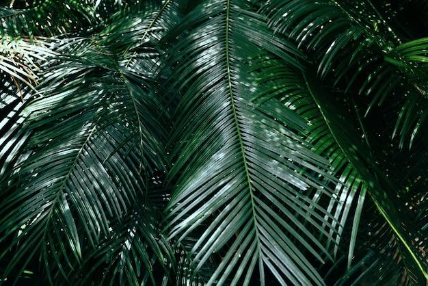 Palmbladeren in de jungle