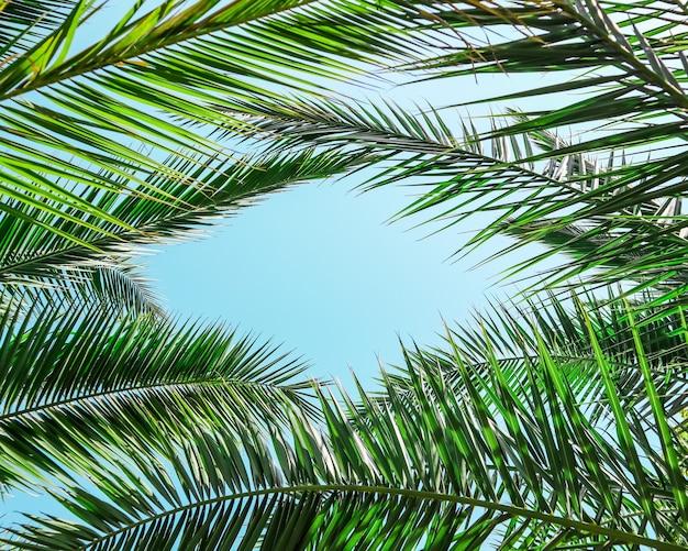 Palmbladeren op blauwe hemelachtergrond