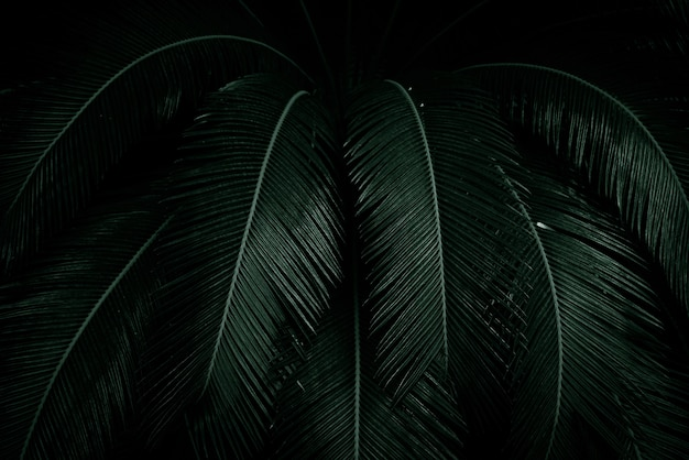 Palmbladeren op donker in de jungle. dichte donkergroene bladeren in de tuin 's nachts. aard abstract. tropisch woud. exotische plant. mooie donkergroene bladtextuur.