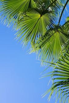 Palmbladeren op een heldere blauwe hemelachtergrond, verticaal beeld