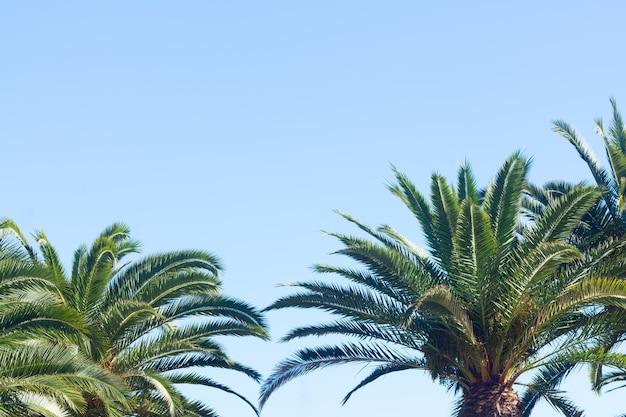 Palmbladeren op een heldere blauwe hemelachtergrond