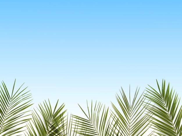 Palmbladeren op een hemelsblauw. kopieer ruimte