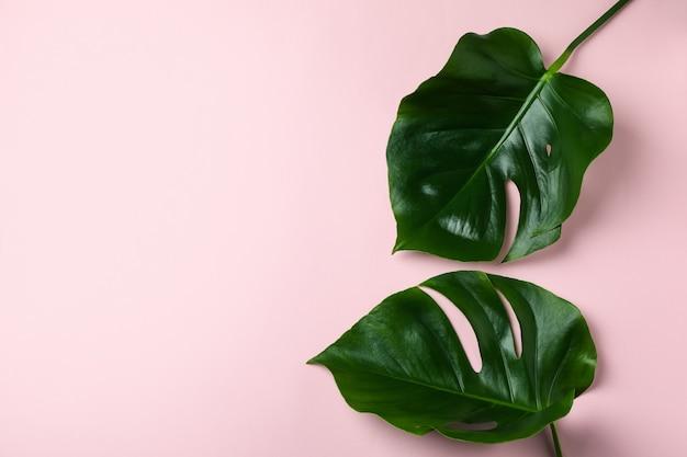 Palmbladeren op roze