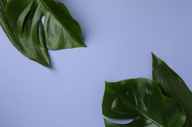 Palmbladeren op violette geïsoleerde achtergrond, ruimte voor tekst