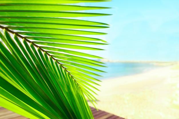 Palmbladeren over vreedzaam tropisch strand achtergrond blauwe zee landschap kaart