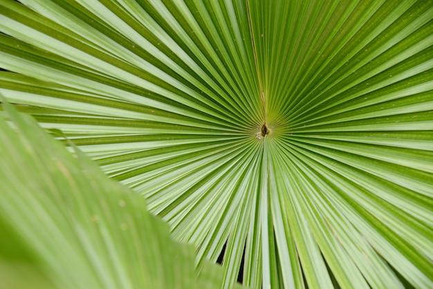 Palmbladtextuur met exemplaarruimte