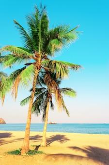 Palmbomen aan de oever van de indische oceaan. emiraat fujairah, verenigde arabische emiraten. helder getinte foto.
