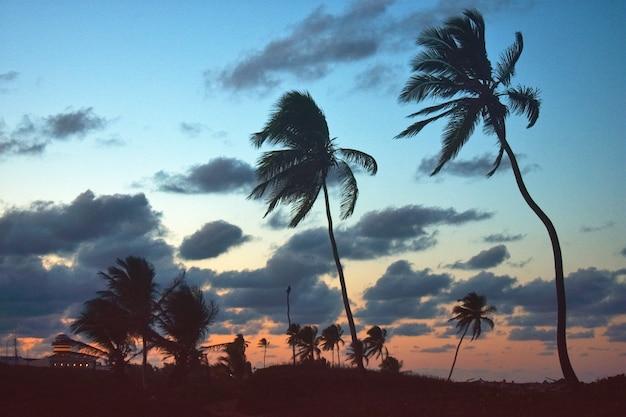Palmbomen aan de zeekust bij zonsondergang