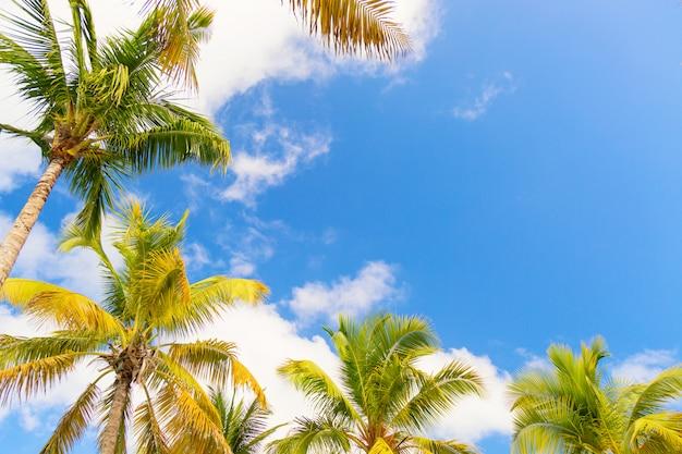Palmbomen bij blauwe zonnige hemelachtergrond