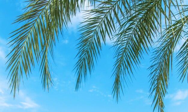 Palmbomen bladeren op een achtergrond van de lucht