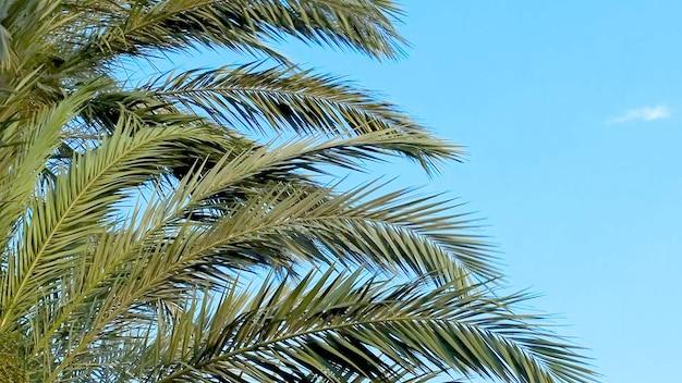 Palmbomen bladeren tegen blauwe hemelachtergrond