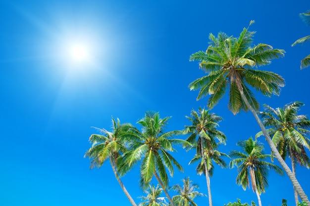 Palmbomen en blauwe lucht met zon lichten