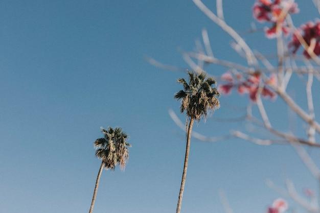 Palmbomen en bloemen in de zomerhemel