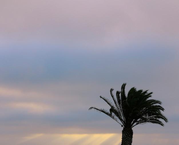 Palmbomen en kleurrijke lucht met prachtige zonsondergang