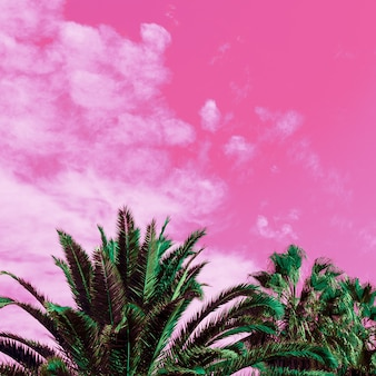 Palmbomen en roze lucht. eenhoorn stijl. minimale kunst