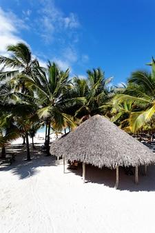 Palmbomen in caraïbisch strand