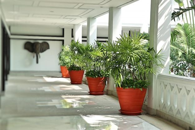 Palmbomen in het gebouw