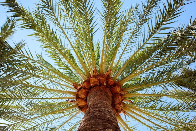 Palmbomen met zonlicht