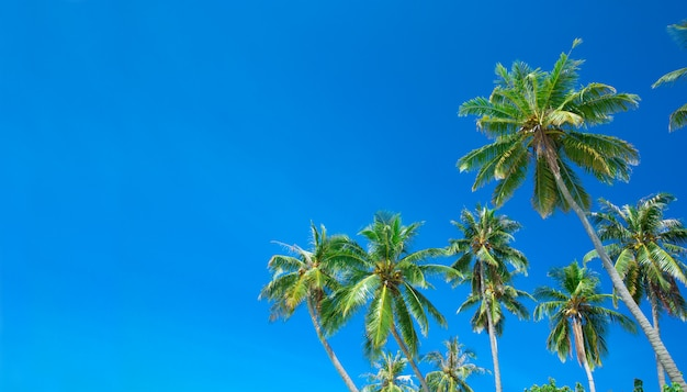 Palmbomen op de achtergrond