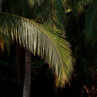 Palmbomen op het strand, sayulita, nayarit, mexico