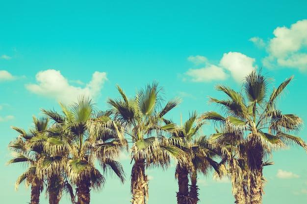 Palmbomen op het strand tegen levendige blauwe hemel.