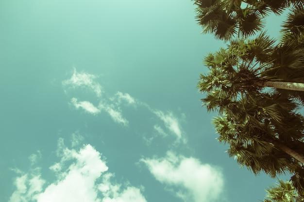 Palmbomen op het strand.