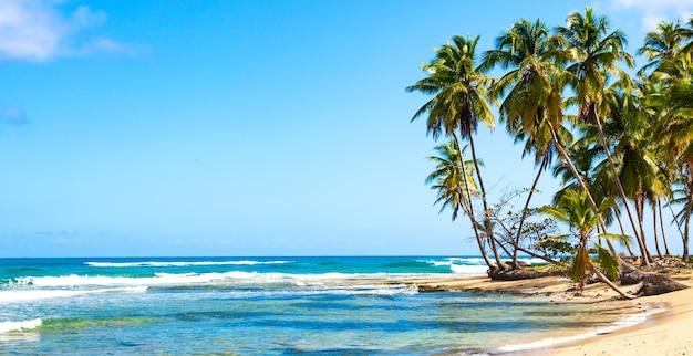 Palmbomen op het wilde tropische strand in de dominicaanse republiek. vakantie reizen achtergrond. bannerformaat.